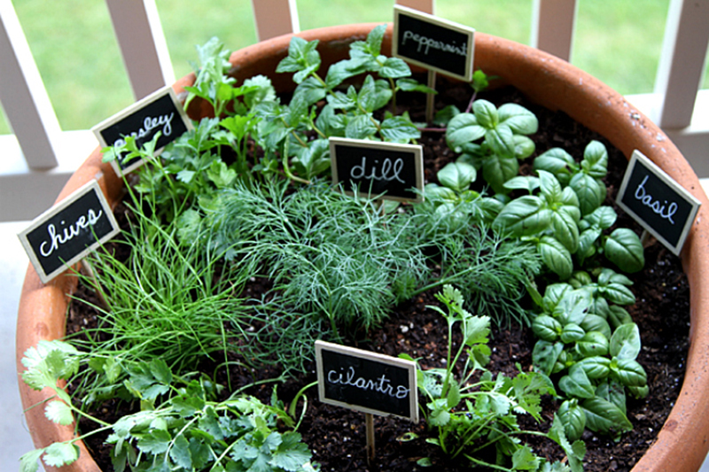 Good Garden Design With Tips To Start Your First Herb Garden In Singapore With  Backyard Arbor From